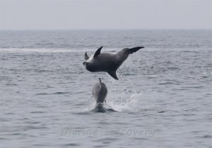 bottlenose-dolphins2