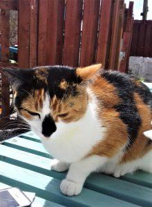 Elfie The Mexico Inn cat