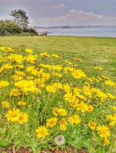 Wild Flowers at Newlyn Green